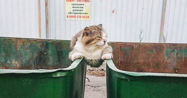 17  cats that couldn   t care less about public opinion