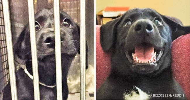 20 Before and After Doggie Adoption Photos That Show True Happiness Without Words