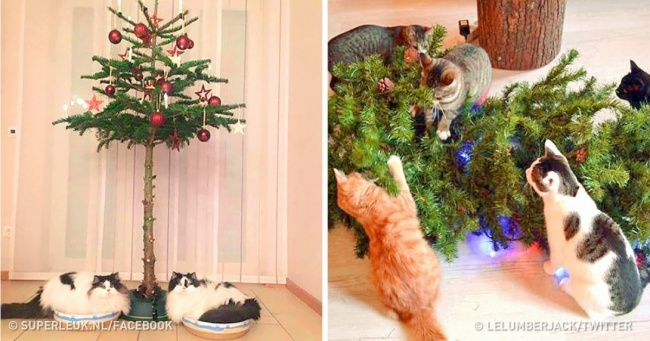 21 Times Animals Behaved Like a Grinch When They Saw a Christmas Tree