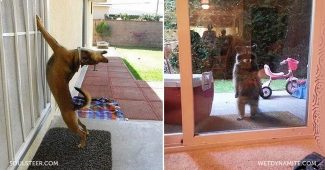 25 animals who are really, really eager to come inside