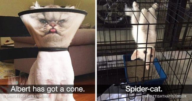 27 Crazy Snapchats Every Cat Owner Can Totally Relate To
