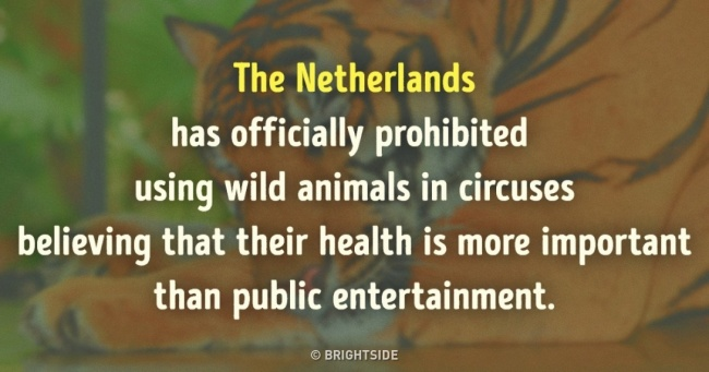 7 Interesting Facts That Prove That the Netherlands Is the Country of the Future