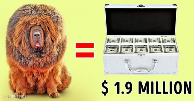 The 10 Most Expensive Dogs in the World That Are Incredibly Charming