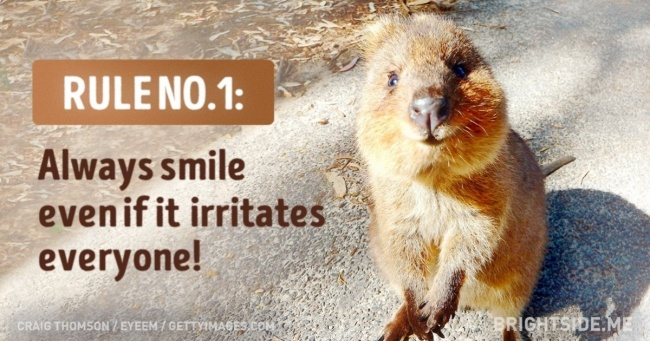 The quokka   s rules for life