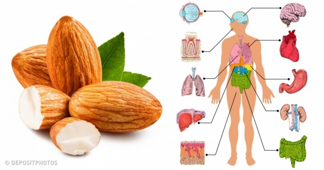 7 Things That Happen to Your Body When You Eat 4 Almonds a Day
